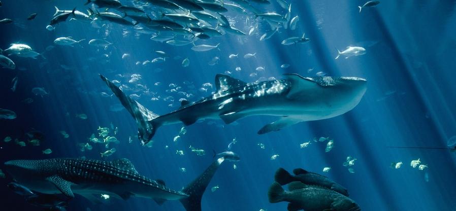 保护海洋动物的组织