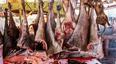 全球最恐怖的动物交易市场,野生动物现烤现卖!