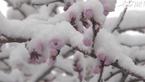 白雪却嫌春色晚 故穿庭树作飞花