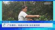 《生财有道》 20210119 广东惠东:地道乡村味 实在富民财
