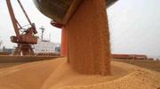 商品期权或已获批落地:白糖、豆粕有望打响头炮