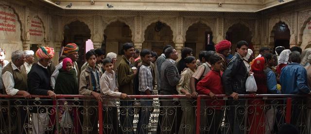 印度老鼠神庙 供奉2万只老鼠引信徒祷告