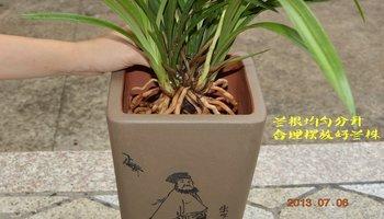 兰花专用营养土