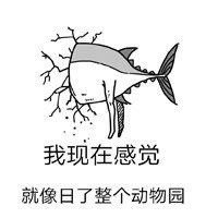咸鱼表情包1.jpg