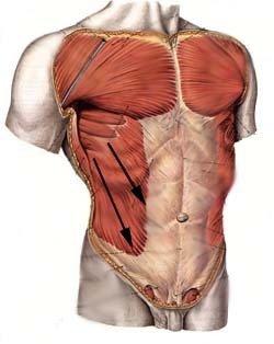 剑突右下延右侧肋骨疼痛,腰以上至腋下肋骨疼痛,右后背肩胛骨及图片