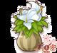 水芋盆栽.png