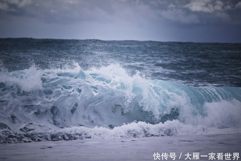 海边雁风景图片