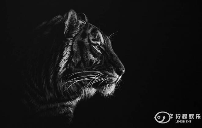 动物黑白照(4)