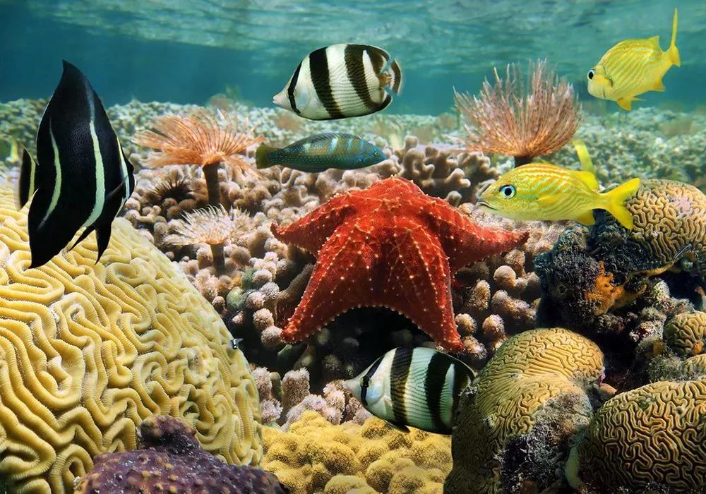 热带鱼拼图下载