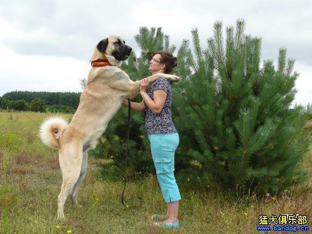 犬-世界上最厉害的狗有