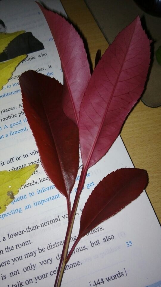 这些都是什么树叶哦叫什么名字