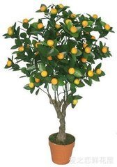 橘子树干简笔画