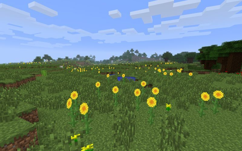 Sunflower plains.jpg