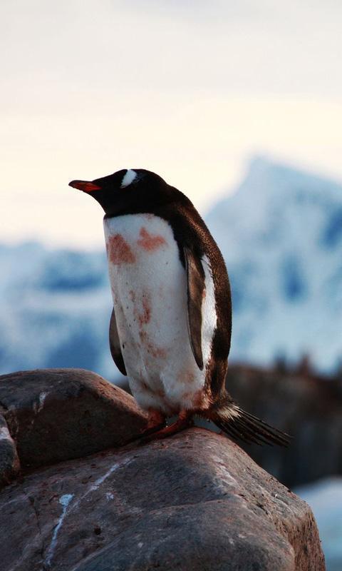 卖萌的南极动物_360手机助手