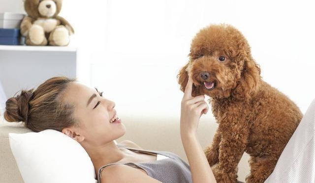 <b>泰迪犬最渴望被主人抚摸这5个部位,别不好意思,这是爱它的表现</b>