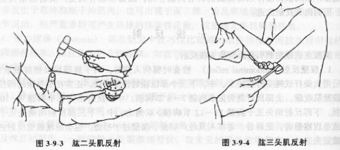 肌节收缩结构图