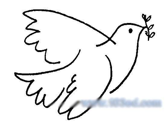 儿童画鸽子怎么画图片