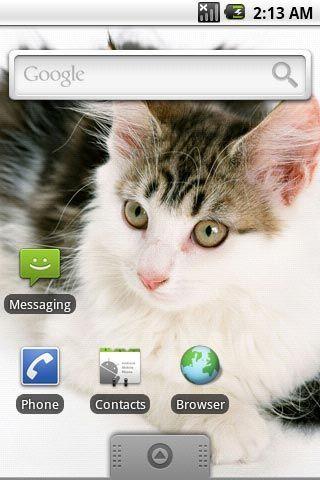 超可爱小猫咪第一辑主题壁纸