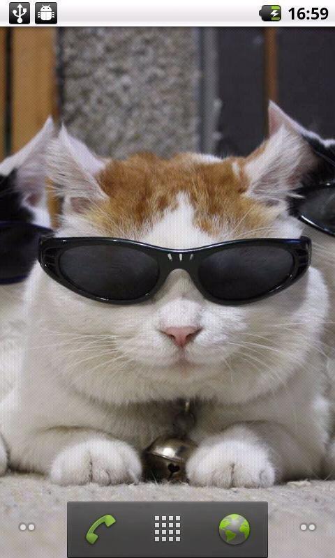 >可爱猫叔动态壁纸