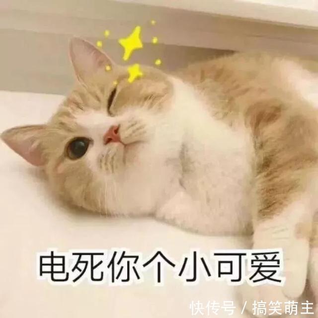 卖萌表情表情:你这个小可爱,电你喔没钱不敢说话猫咪包图片