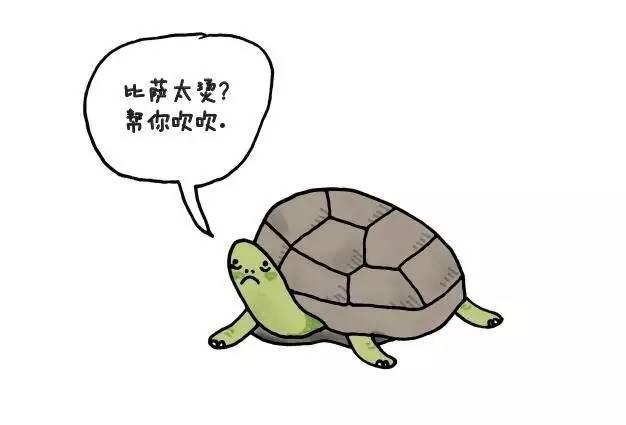章鱼没朋友斑马怕自己睡 动物冷知识你知多少? - 粉伊香 - 粉伊香