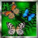 蝴蝶动态壁纸 Butterfly Live Wallpaper