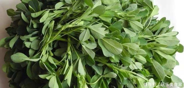 苜蓿叶的几种新吃法,简单美味又下饭,学会了可以做给家人吃