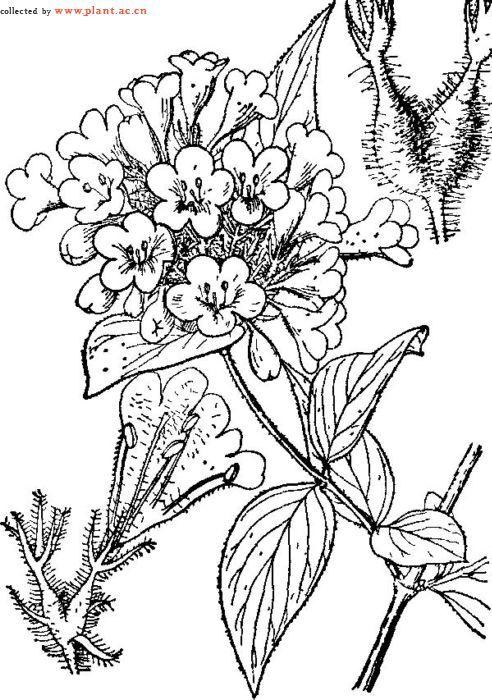 丛植平面图例手绘