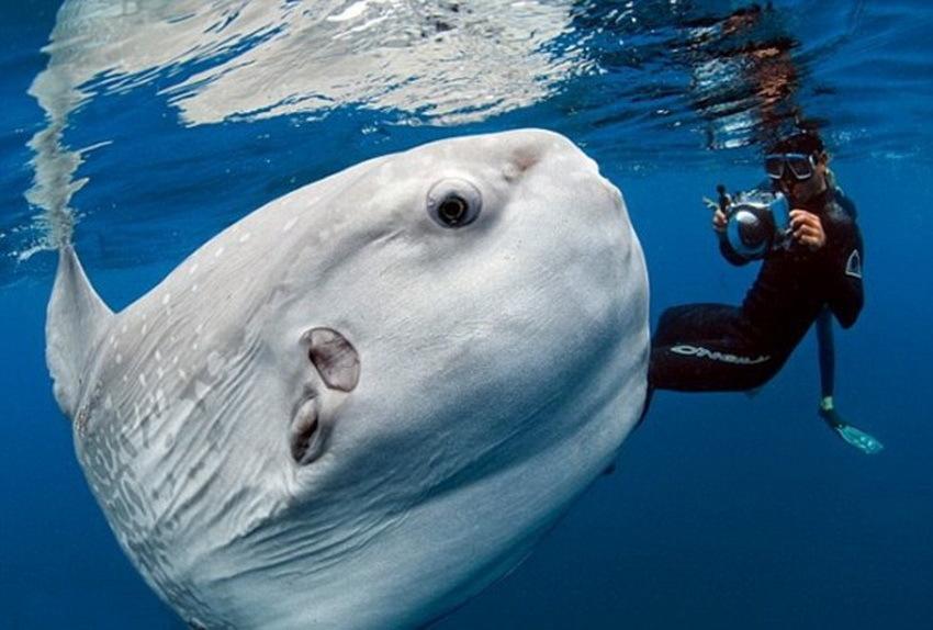 壁纸 动物 海洋动物 桌面 850_574