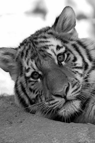 惊奇的野生动物图片