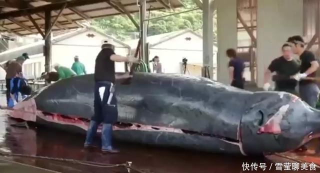 日本人用鲸鱼做刺身,看着就特别的害怕,网友:确