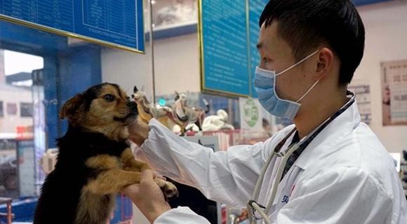江西南昌:首设犬只领养窗口