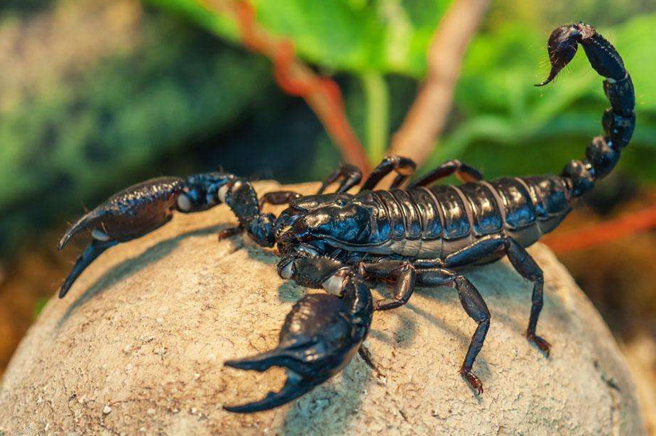 吃害虫的动物有哪些图片