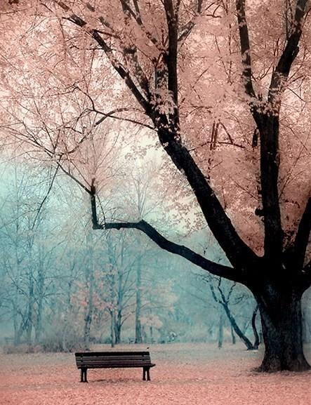动漫樱花树怎么画?跪求啊图片
