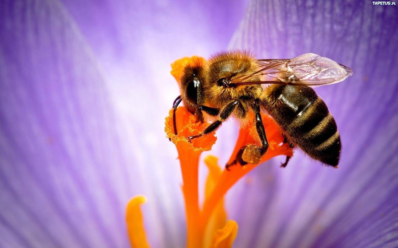 一群蜜蜂矢量图