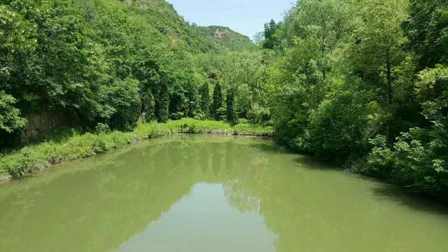 """西安""""卧龙山庄""""风景区惊现西安地区最大面积野生竹林"""