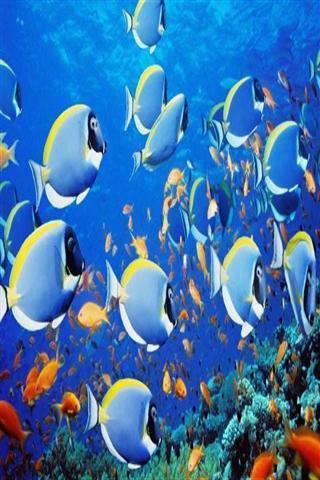 壁纸 海底 海底世界 海洋馆 水族馆 桌面 320_480 竖版 竖屏 手机