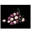 蜜汁浆果.png