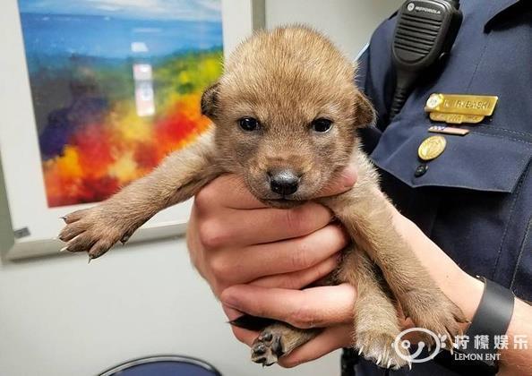 """路边捡到一只""""小狗""""网上搜索之后有惊人发现"""