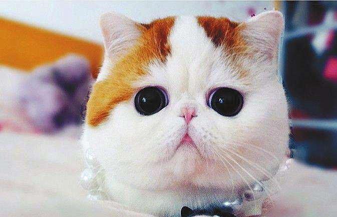 那些成为名字的表情猫咪叫表情?惊讶猫张家辉德国买v名字原本包三千万图片