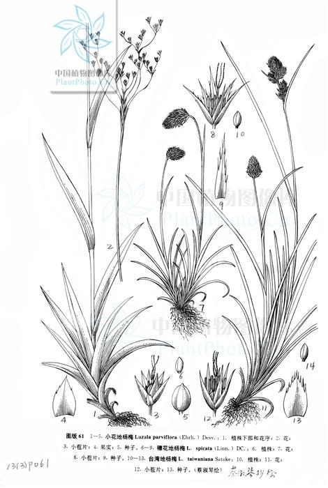 各种小花的图片简笔画