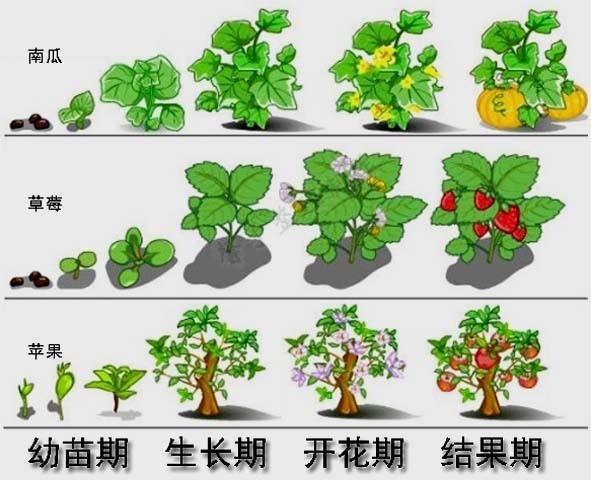 植物的生长一般要经过什么