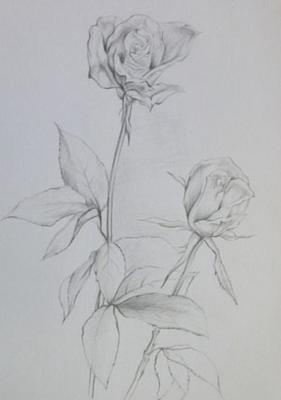 简笔画蔷薇花藤内容图片展示