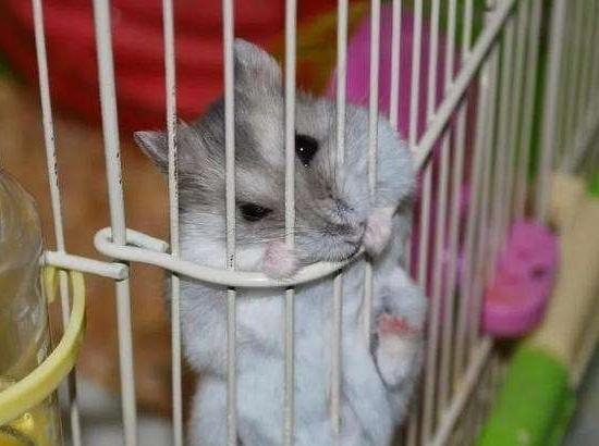 仓鼠天天夜里咬笼子,让人不得安眠,这一难题到底该如何解决?