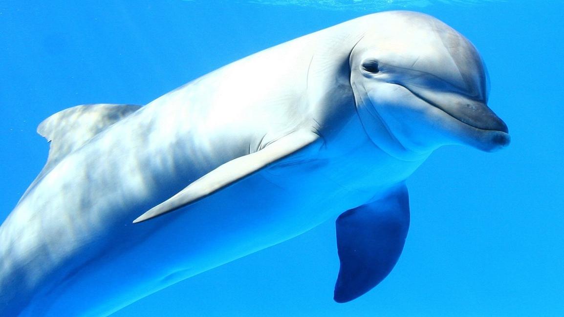 壁纸 动物 海洋动物 鲸鱼 桌面 1154_649