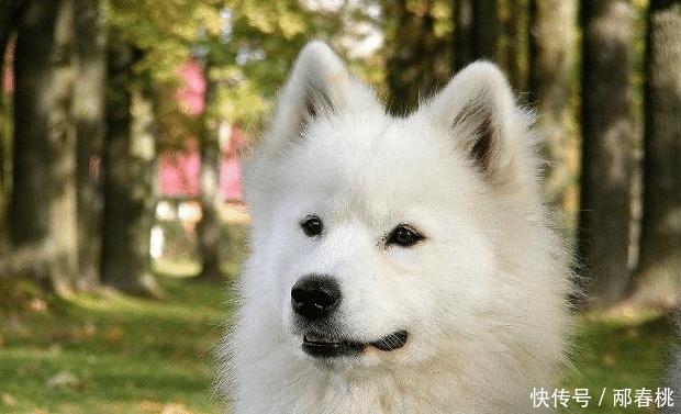 城市禁狗越来越严格,这5种狗在内,中华田园犬上榜令人惊讶!