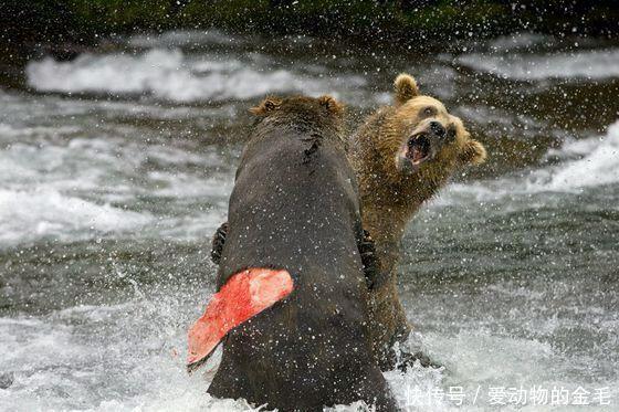 动物世界中的激烈争斗