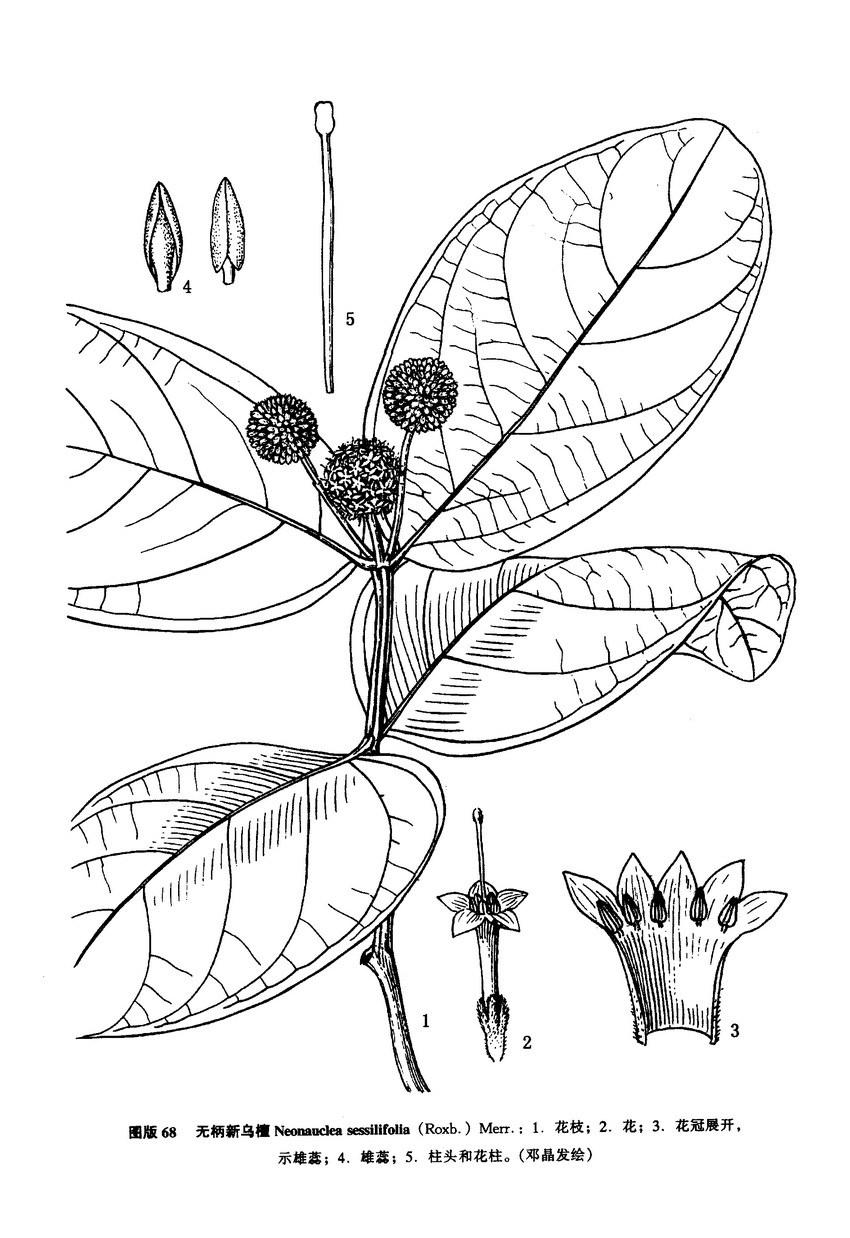 植物手绘线稿树