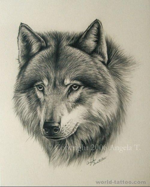 狼的素描画-狼头怎么画图片