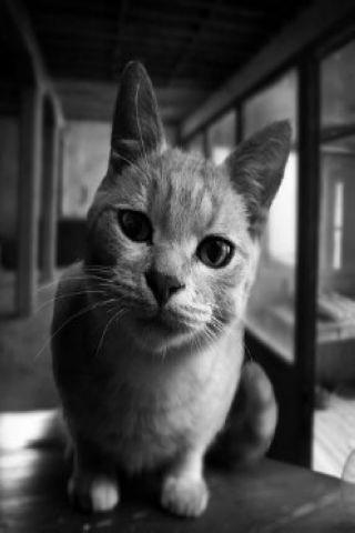 可爱的猫壁纸内包含了许多精美图片,若你喜欢,可以将其设置为手机桌面
